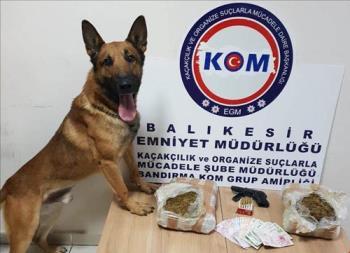 NARKOTİK KÖPEĞİ 'HELYUS'İŞ BAŞINDA